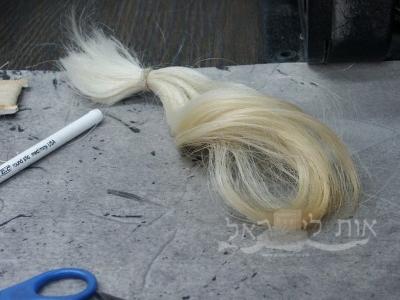 שער מזנב עגל